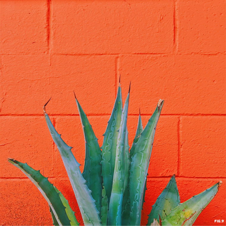 agave-against-oragne-wall